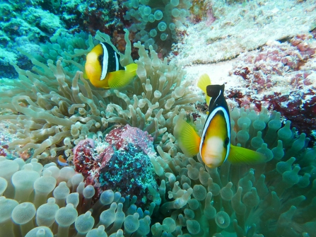 ANEMONE FISH by Rikke