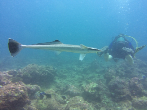REMORA by Cat