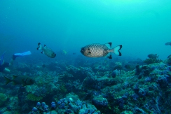 SOLDIER FISH by Rikke
