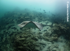 Only here these rays are not shy at all