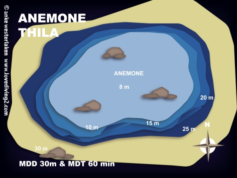 ANEMONE-THILA