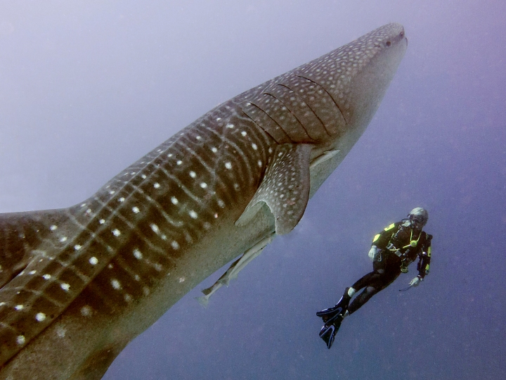 Anke and whale shark 01 retouche.jpg