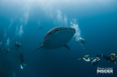 WHALE SHARK Maldives 2017-08 Simon Lorenz-3230
