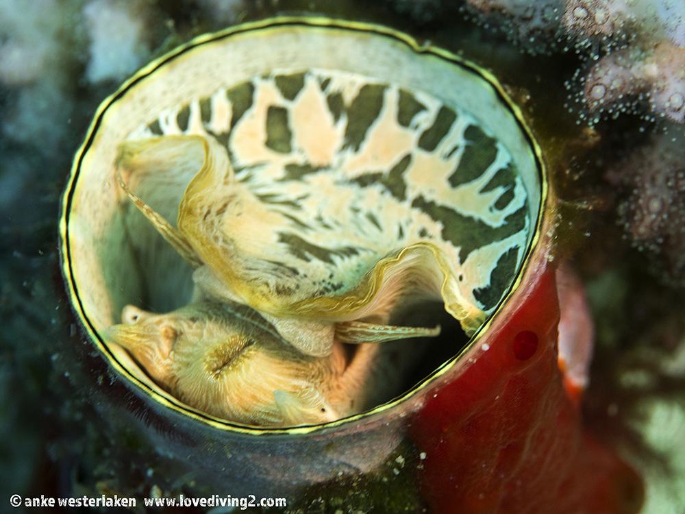 Worm tube at Mayhem RA Indonesia P2210425.jpg